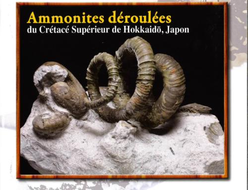 La revista «Fossiles» se hace eco de las Jornadas de Paleontología